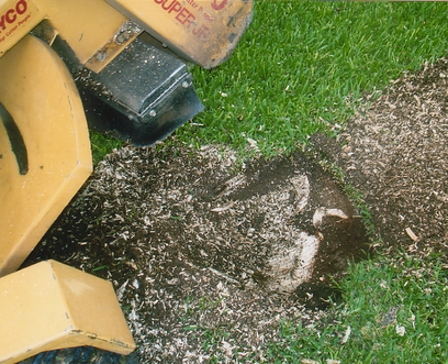 best cheap cost of stump removal fort worth