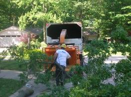 tree removal, haul away service, bobcat, stump grinding and more - heb area